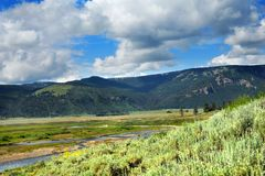 Natur i Yellowstone Arkivbild