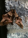 Natur an Ihrem Türschritt Stockfoto