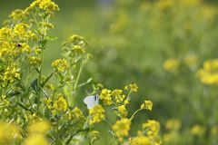 Natur im Frühjahr stockfotografie