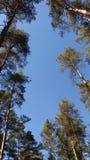 Natur im Himmel Niederlassungen mit trockenen Blättern gegen einen wunderbar blauen Himmel Lizenzfreies Stockfoto
