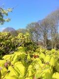 Natur im Park Stockbilder