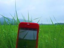 Natur im Telefon Lizenzfreie Stockbilder