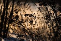 Natur im Vorfrühling Lizenzfreie Stockbilder