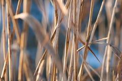 Natur im Vorfrühling Stockfotografie