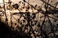 Natur im Vorfrühling Lizenzfreies Stockbild