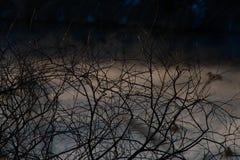 Natur im Vorfrühling Stockbild