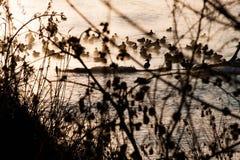 Natur im Vorfrühling Stockbilder