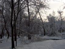 Natur im Winter, ein sonniger Tag nach Schneefälle, ein defekter Baum nach einem Blizzard Stockbilder