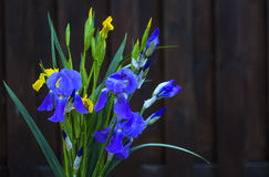 Natur iris, blomma, Royaltyfria Foton