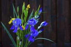 Natur, Iris, Blume, Lizenzfreie Stockfotos