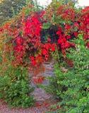 Natur Irland Royaltyfria Bilder
