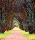 Natur Irland Fotografering för Bildbyråer