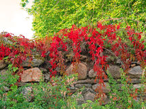 Natur Irland Royaltyfria Foton