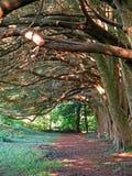 Natur Irland Arkivbild