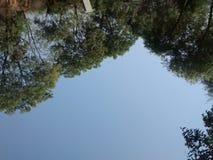 Natur ist oben Lizenzfreie Stockfotografie