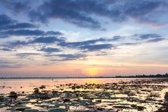 Natur, Jahreszeit, Hintergrund Stockbild