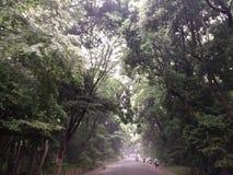 Natur Japan lizenzfreies stockbild
