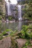 Natur in Kerikeri, Neuseeland: moosige Felsen und Farne bei Wairoa lizenzfreies stockfoto