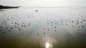 Natur-Landschafts-Ansicht von den Seemöwen, die in das Meer mit Sun-Reflexion fliegen und schwimmen Lizenzfreies Stockfoto