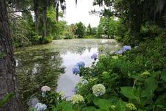 Natur landskap, sjö, skog som är tropisk royaltyfria bilder