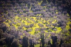 Natur, landskapfält med träd, äng och mimosor Royaltyfri Foto