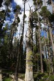 Natur lasowi drzewa fotografia royalty free