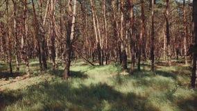 Natur lasowych drzew sceneria pokojowa zdjęcie wideo