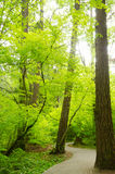 Natur-Leben Stockfotografie