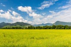 Natur in Liptov-Region, Slowakei in Sommer 2015 Lizenzfreie Stockfotos