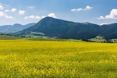 Natur in Liptov-Region, Slowakei in Sommer 2015 Stockbild