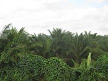 Natur in Malaysia lizenzfreies stockbild