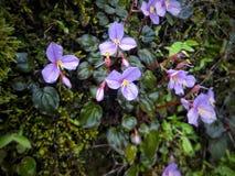Natur med grönt gräs och purpurfärgade blommor arkivfoton