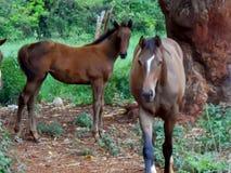 Natur Mischung, Pferd und Envionment lizenzfreies stockfoto