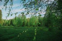 Natur moln för himmel för skogträd Royaltyfri Foto