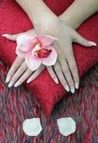 Natur morte mit den Händen und den Blumen der Frau Stockbilder