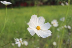 Natur när i vit Royaltyfria Foton