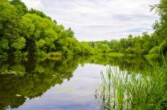 Natur nahe dem Wasser Lizenzfreies Stockbild