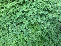 Natur. Al,bigroud trees, grass, green royalty free stock photos