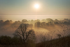 Natur, Nebel und Sonnenlicht Lizenzfreie Stockfotos