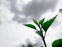 Natur nel cielo immagine stock libera da diritti