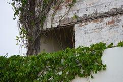 Natur och byggnad Royaltyfri Foto
