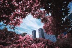 Natur och byggnad i Tokyo royaltyfri foto