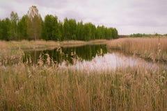 Natur odbicia w małym jeziorze Zdjęcie Royalty Free