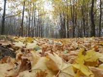 Natur oder Weißrussland Lizenzfreies Stockbild