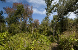 Natur-Panorama Lizenzfreies Stockbild
