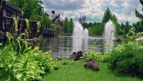 Natur-Park Duckt Familie im schönen Naturpark Apfelbaum, Sonne, Blumen, Wolken, Wiese? stock footage