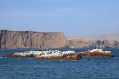 Natur Park Islas Ballestas Peru Royalty Free Stock Photography