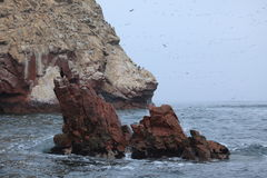 Natur Park Islas Ballestas Peru Stock Photos