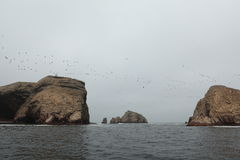 Natur Park Islas Ballestas Peru Royalty Free Stock Photos