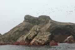 Natur Park Islas Ballestas Peru Royalty Free Stock Images
